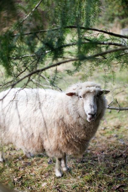 wool-73